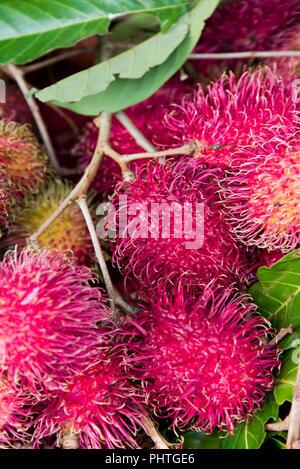 Vertical close up of rambutans. - Stock Photo
