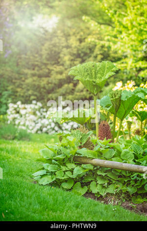 Large tropical plants growing in a garden - Stock Photo