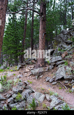 Trail Winds Up Through Forest in Wind Cave National Park - Stock Photo