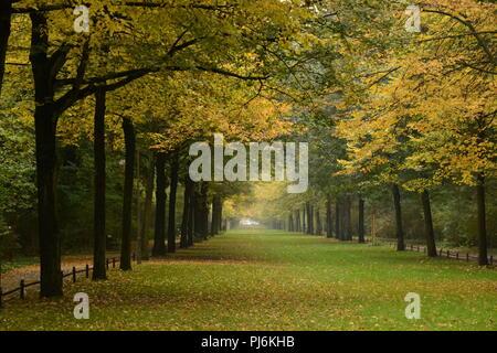 Autumn leaves foliage in Tiergarten, Berlin, beautiful tree alley - Stock Photo