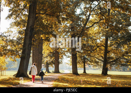 Beautiful autumn view. Many yellow trees in clear weather and a path through the forest along which people go. - Stock Photo