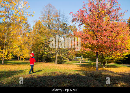 Autumn park with colourful trees and autumn leaves, father is caring his son on the shoulders and walking through the grass in the city park - Stock Photo