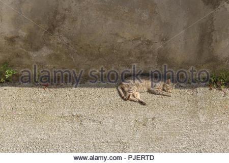 Sleeping street cat - Stock Photo