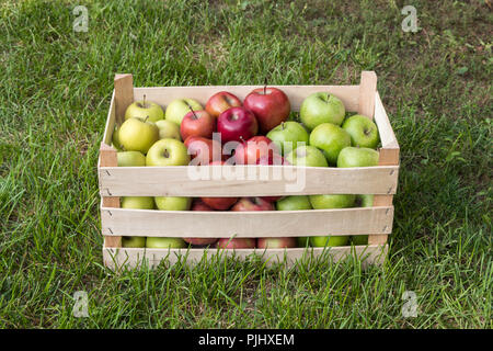 Golden Delicious, Gala and Granny Smith apples in a farmers market crate, Serbia - Stock Photo