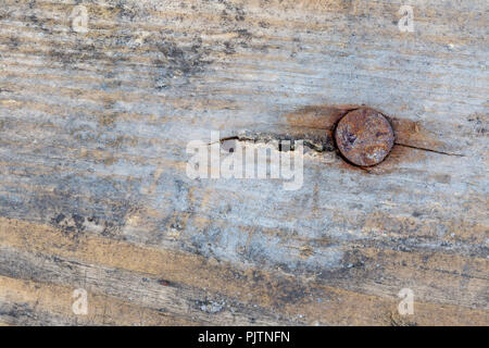 Old rusty nail in an old wooden board macro shot - Stock Photo