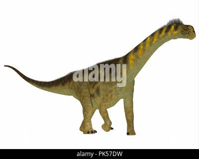 Camarasaurus Dinosaur Side Profile - Camarasaurus was a herbivorous sauropod dinosaur that lived in North America during the Jurassic Period. - Stock Photo
