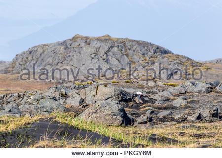 Stokksnes peninsula in Iceland - Stock Photo