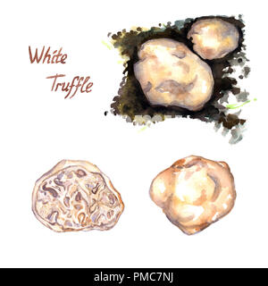 White truffle set, growing in ground, whole and cut, isolated hand painted watercolor illustration - Stock Photo