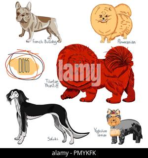 Dog collection on white background. Set of hand drawn purebred canines. - Stock Photo