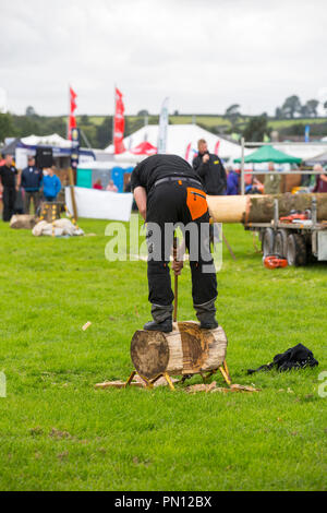 Lumberjacks competing in the log chopping competition at the Westmorland County Show, near Kendal, Cumbria, UK. - Stock Photo