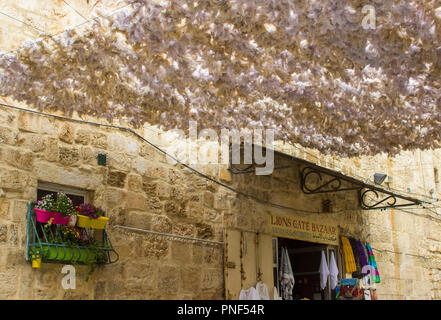 10 May 2018 A small shop doorway under a large feathery sun canopy suspended across the street in the old city Lions Gate Street Jerusalem, Israel. - Stock Photo