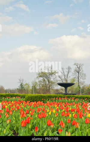 The Colonial Daughters Fountain amid a field of red and yellow tulips in spring under a partly cloudy sky at St. Louis Forest Park on an April evening - Stock Photo