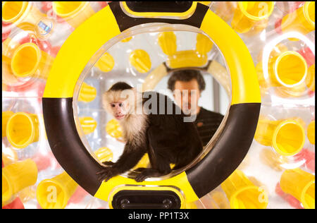 Prod DB © Universal Pictures - Wild Bunch / DR SOUTHLAND TALES de Richard Kelly 2006 USA singe, macaque - Stock Photo
