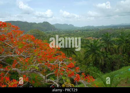 Viñales Valley, view across lush green landscape, Pinar del Rio Province, Cuba. - Stock Photo