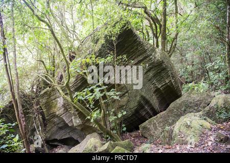 Lush rainforest growth and limestone rock formations in Kawakawa, New Zealand - Stock Photo