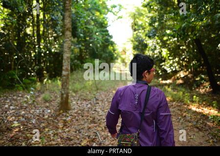 A woman walking through a forest, Misty Mountains wilderness tracks, Palmerston Doongan Wooroonooran National Park, Queensland, Australia - Stock Photo