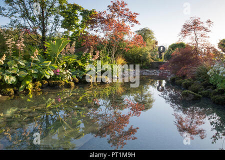 Large pond water feature with moss covered stone boulders in Japanese style garden with, Gunnera manicata Rodgersia aesculifolia, Acer palmatum 'Chito - Stock Photo