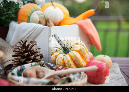 Autumn festival decoration with still life of pumpkins, flowers, nuts and apples on wooden table - Stock Photo