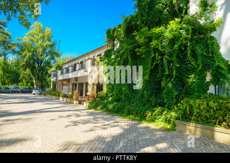 window in the wall of an old house overgrown by green wild grapes. Green plants on building facade. Nature texture - Stock Photo