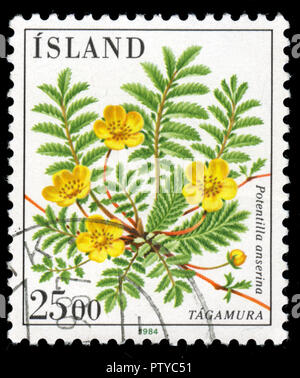 Postmarked stamp from Iceland in the Flowers series issued in 1984 - Stock Photo