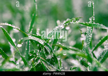 Close-up of water drops on grass - Stock Photo