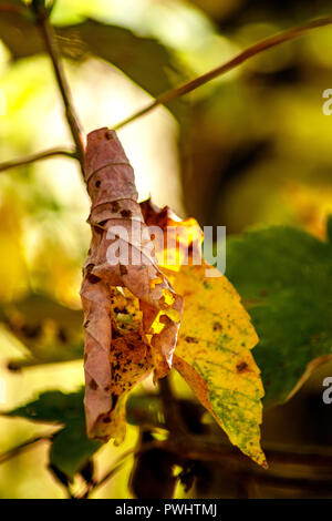 Concept nature : The hanging leaf - Stock Photo