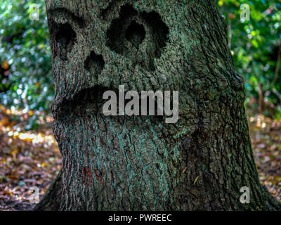The Monster tree in the woods - Stock Photo