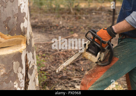 Lumberjack with chainsaw cutting tree trunk in forest - Stock Photo