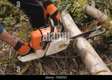 Lumberjack with chainsaw cutting dead tree in forest - Stock Photo