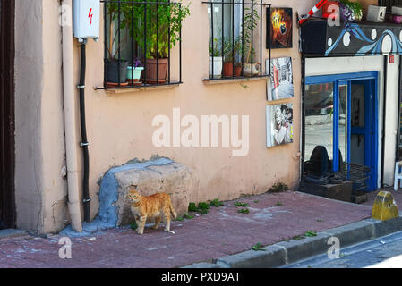 Istanbul, TURKEY, September 20, 2018. Red cat standing on sidewalk near the entrance to a small cafe. - Stock Photo