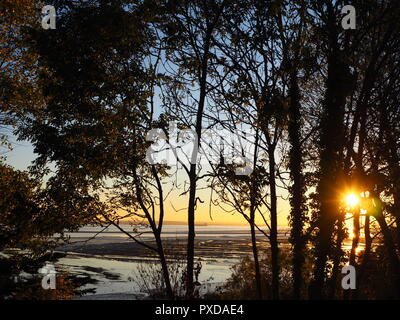 setting sun over the thames estuary seen through the trees at Southend on Sea. - Stock Photo