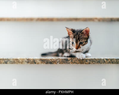 Cute Baby Cat Portrait On Home Stairs - Stock Photo