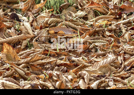 Herbstlaub am Boden, Autumn leaves on the ground, autumn, harvest, fall, leaves, foliage, beech leaves, season, colorful, detail, faded, variety, colo - Stock Photo