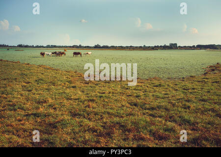 Wild horses and foals in the green marsh feeding on the blue sky background - Stock Photo
