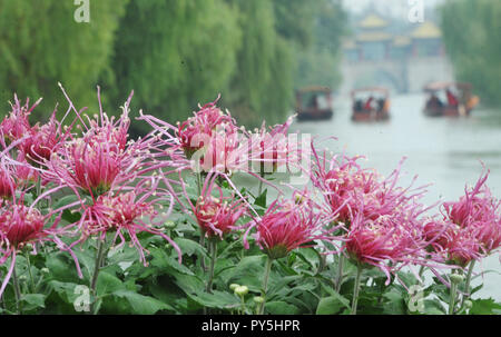 Yangzhou, China's Jiangsu Province. 25th Oct, 2018. Tourists view chrysanthemum flowers at Slender West Lake scenic spot in Yangzhou, east China's Jiangsu Province, Oct. 25, 2018. A chrysanthemum fair kicked off here on Thursday. Credit: Pu Liangping/Xinhua/Alamy Live News - Stock Photo