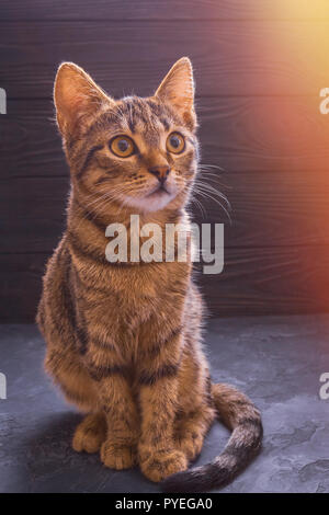 Beautiful young cat sitting on a table on a wooden background - Stock Photo
