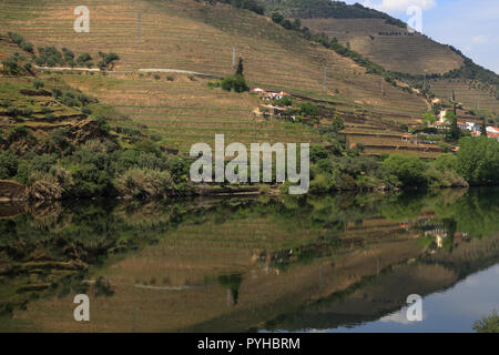 Portugal, Douro Region, Pinhao. Detail of the Douro River with vineyards  in reflected on the water. UNESCO World Heritage Site. - Stock Photo