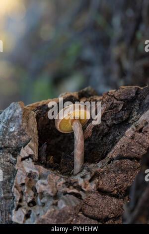Small mushroom growing on dead wood. - Stock Photo