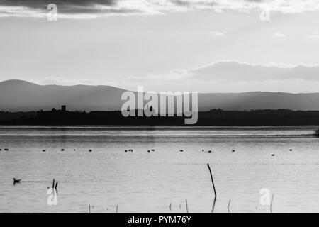 Beautiful view of Trasimeno lake at sunset with birds on water, trees and Castiglione del Lago town in the background - Stock Photo
