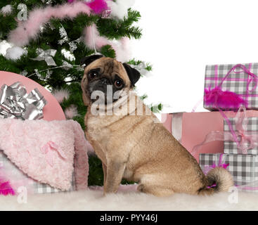 Pug, 4 years old, with Christmas tree and gifts in front of white background - Stock Photo