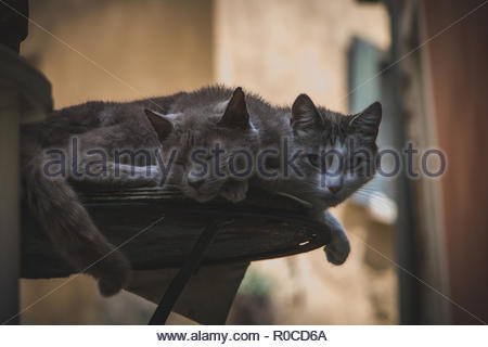 Two Cats in the french Village Nyons Provence domestic cats lazy looking at person cute domestic cat sleeping - Stock Photo
