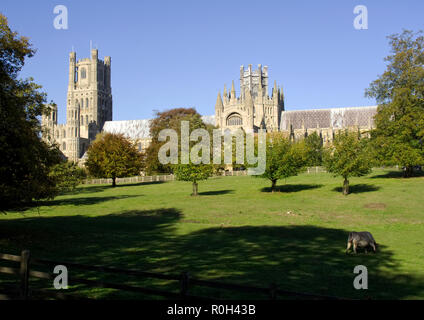 View of the magnificent Ely Cathedral in Ely, Cambridgeshire from The Deans Meadow showing the Gothic splendour ot this medieval masterpiece. - Stock Photo