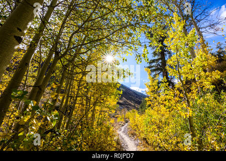 Hiking trail lined up with aspen trees in the Eastern Sierra mountains, John Muir wilderness, California; sunny fall day - Stock Photo