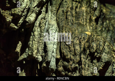 Close up stalactites on rock in cave - Stock Photo