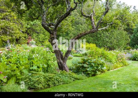 Thuya Garden in Northeast Harbor on Mount Desert Island in Maine, United States - Stock Photo