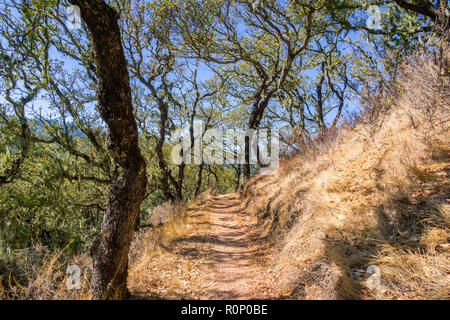 Hiking trail lined up with oak trees in Palo Alto Foothills Park, San Francisco bay area, California - Stock Photo