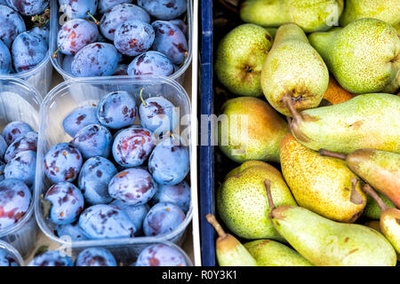 Closeup flat top view of retail display on farmers market of boxes, plastic containers of plums and fresh pears - Stock Photo