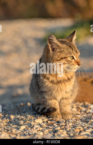 Cute stray kitten sitting on the ground. Blurred background. - Stock Photo