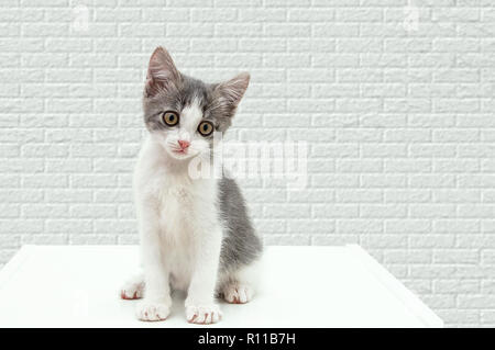 A small kitten sits on a curbstone. Against a white brick wall. - Stock Photo