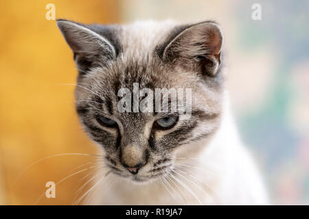 Young, cute cat close-up portrait photo with bokeh background. - Stock Photo